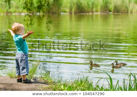 the little boy standing on the bank of the lake and looking at floating ducks Stock photo © galitskaya