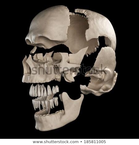 Emberi koponya alkatrészek nézőpont kilátás fehér Stock fotó © Pixelchaos