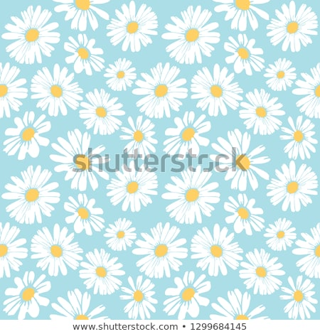 Marguerites vue domaine plein fleurir Photo stock © gemphoto