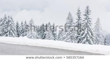 Kar kapalı tarla çam orman Stok fotoğraf © lovleah
