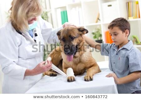 dog getting bandage after injury on his leg stock photo © kzenon