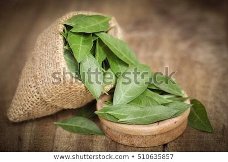 Hennè foglie tutto bianco pelle impianto Foto d'archivio © bdspn