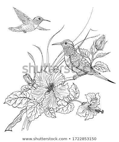 Dois contorno aves preto e branco transparente projeto Foto stock © blackmoon979