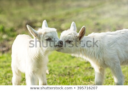 Another cute animal Stock photo © DamonAce
