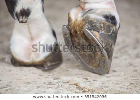 Konia shot szary charakter włosy Zdjęcia stock © jaykayl