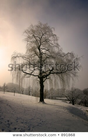 frozen weeping willow Stock photo © Aliftin