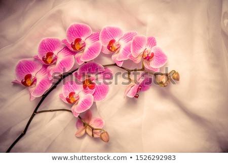orkide · çiçekler · yalıtılmış · beyaz · soyut · doğa - stok fotoğraf © clearviewstock