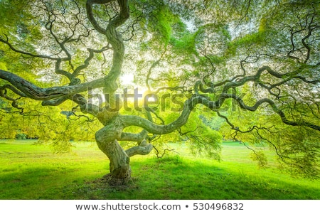 belle · vieux · arbre · printemps · jardin · paysage - photo stock © Julietphotography