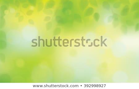 весна зеленые листья дизайна фон кадр красоту Сток-фото © Julietphotography