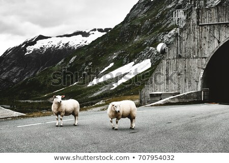 tunnel for cars in norway, europe Stock photo © gewoldi