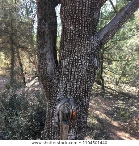 Corteccia grezzo verticale albero legno Foto d'archivio © pixelsnap