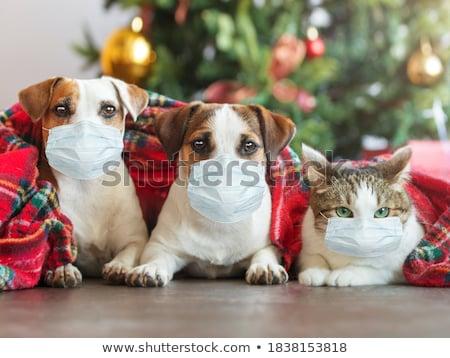 Sevimli Noel köpek vektör karikatür Stok fotoğraf © pcanzo