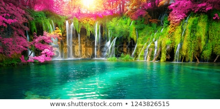 Cachoeira luz solar Nova Zelândia árvore paisagem neve Foto stock © Hofmeester