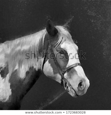 Schilderij portret paard bruin boerderij Stockfoto © val_th