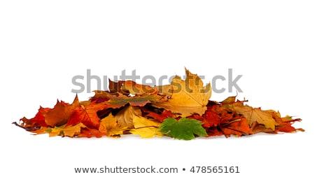 big autumn leaf stock photo © thomaseder