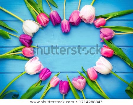 Colorido tulipanes hoja cielo flor Foto stock © dinozzaver