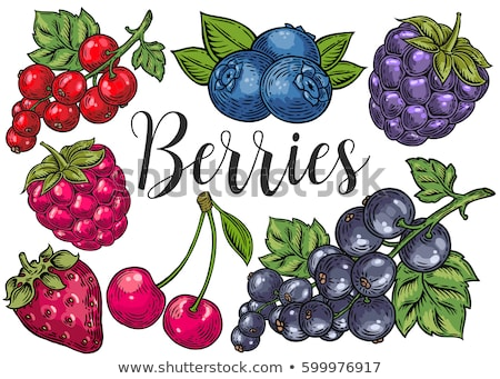 Vector Berry Collection Stock photo © Editorial