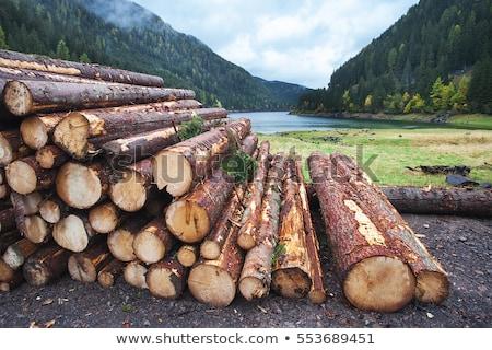 Pine Logs Stacked by Pine Tree Stock photo © tainasohlman