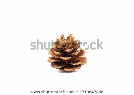 Arany fenyőfa kúp izolált fehér természet Stock fotó © oly5