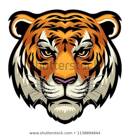 roaring and crawling big cat stock photo © HunterX