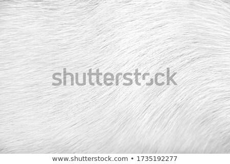 short white fur texture stock photo 169 sergiy artsaba