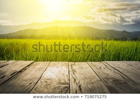 Zonsopgang houten terras mooie heuvels Stockfoto © taviphoto