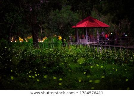 Nuit illustration nature lune montagne lumières Photo stock © adrenalina