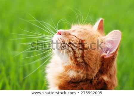 Bonitinho gato jardim grama verde aves ninho Foto stock © meinzahn