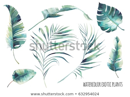 Watercolor leaf of tropical plant - Monstera. Stock photo © gladiolus