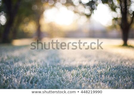 Zimą mroźny ramki karty christmas nowego Zdjęcia stock © enlife
