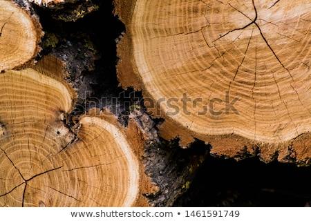 cięcia · dąb · naturalnych · tekstury · pierścienie - zdjęcia stock © olandsfokus