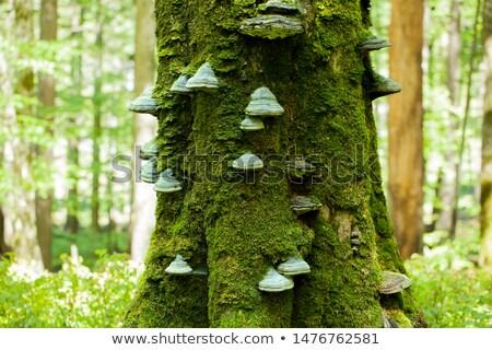 オレンジ · 菌 · 成長 · ツリー · 森 · 自然 - ストックフォト © hofmeester