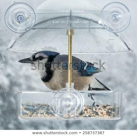 Azul janela pássaro grande anexada molhado Foto stock © backyardproductions