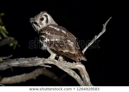 reus · oehoe · boom · natuur · adelaar · milieu - stockfoto © davemontreuil