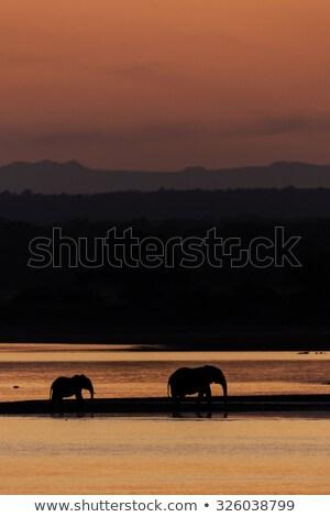 naplemente · folyó · nap · dél · park · Zambia - stock fotó © JFJacobsz