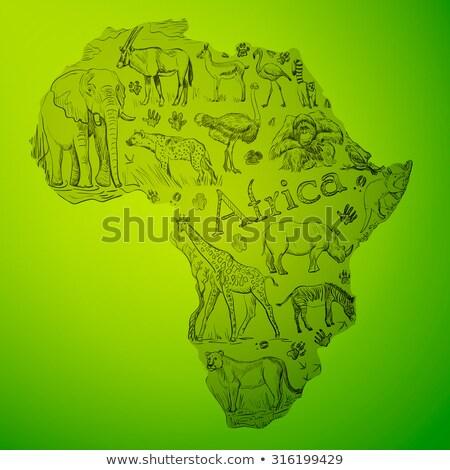 アフリカ 大陸 いたずら書き 動物 世界中 地図 ストックフォト © netkov1