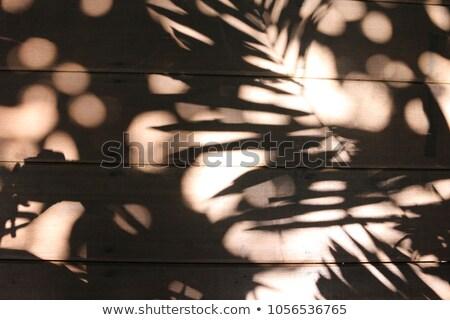 Feuille verte noir asphalte eau texture arbre Photo stock © GeniusKp