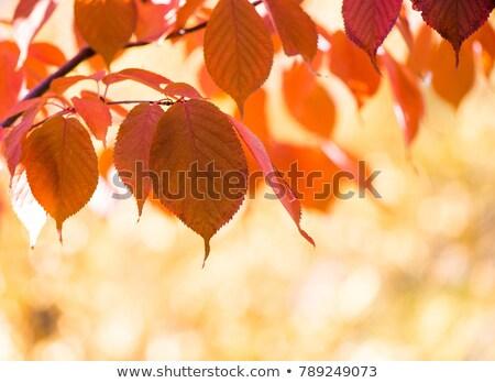 Soleado otono día paisaje montanas Foto stock © Kotenko