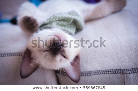 Gyermek sziámi macska fehér mosoly szeretet szemek Stock fotó © cynoclub
