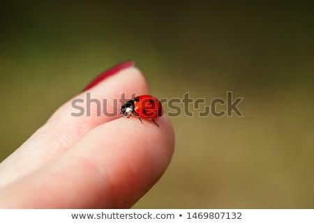 Katicabogár ujj zöld természetes virágmintás természet Stock fotó © simply