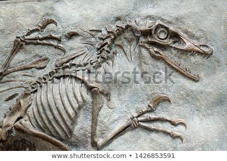 Fosil Stock photo © bluering