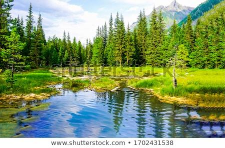 Vijver illustratie boom hemel voorjaar gras Stockfoto © bluering