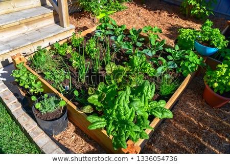own harvest Stock photo © Photofreak