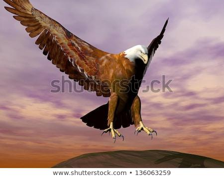 adelaar · landing · 3d · render · groen · gras · dag · hemel - stockfoto © mariephoto