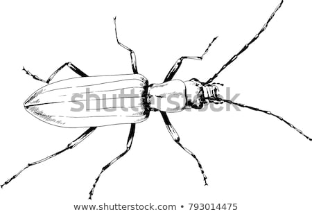 symbol of biological danger drawn with paint Stock photo © blackmoon979