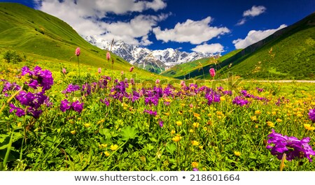 Stock photo: Summer Landscape With Blossoming Mountain Valley In Georgia