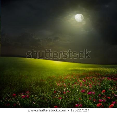 Scène champ de fleurs forêt scène de nuit nuit illustration Photo stock © bluering