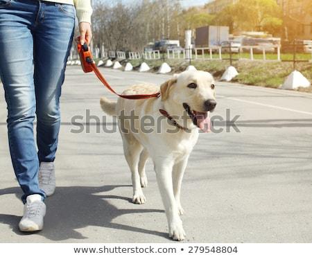 Foto stock: Homem · caminhada · cão · rua · posando · câmera