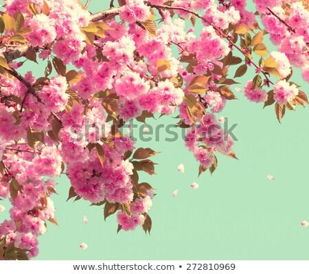 Bahar çiçek güzel doğa sahne Stok fotoğraf © Virgin