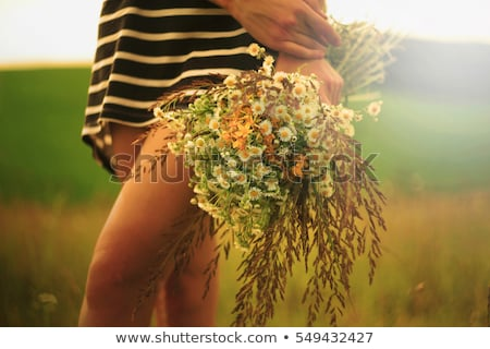 Young girl picking flowers in field Stock photo © IS2